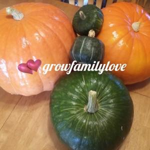 Pumpkin & Pumcchini Squash