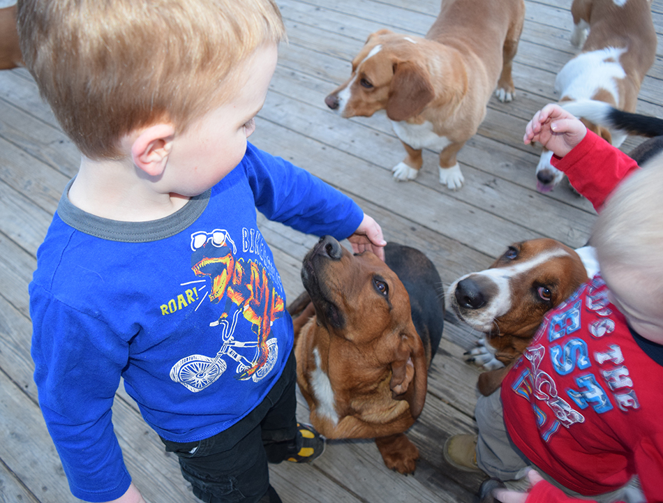 boys and basset hound dogs