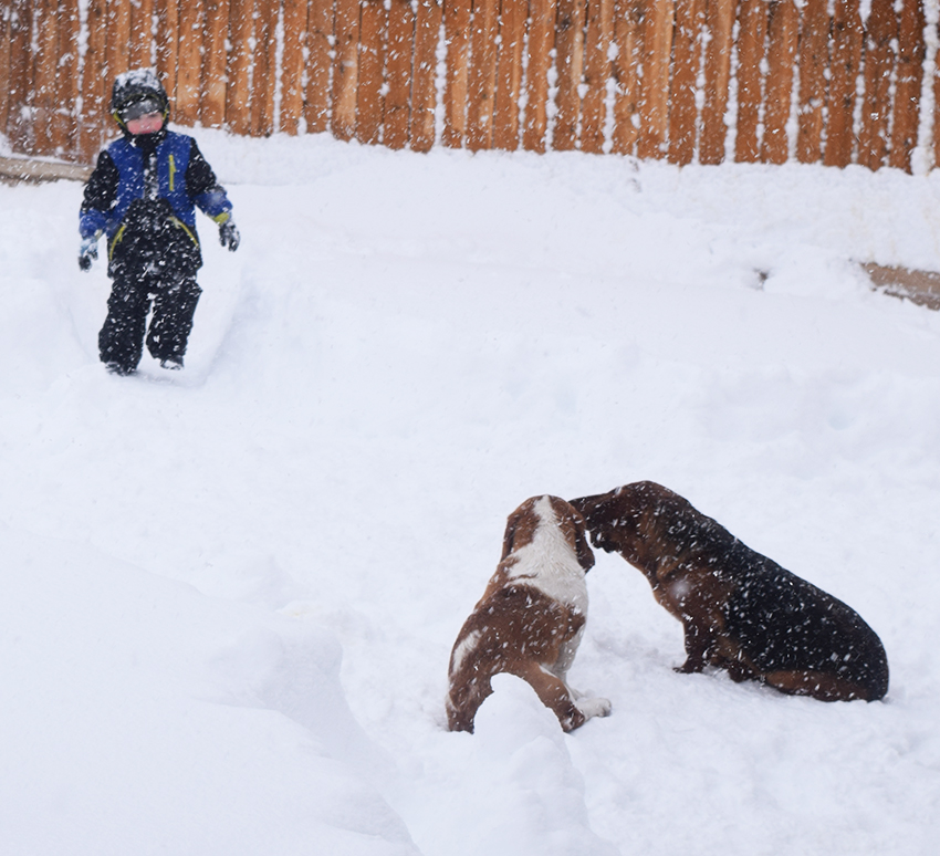 Noah and dogs in the snow