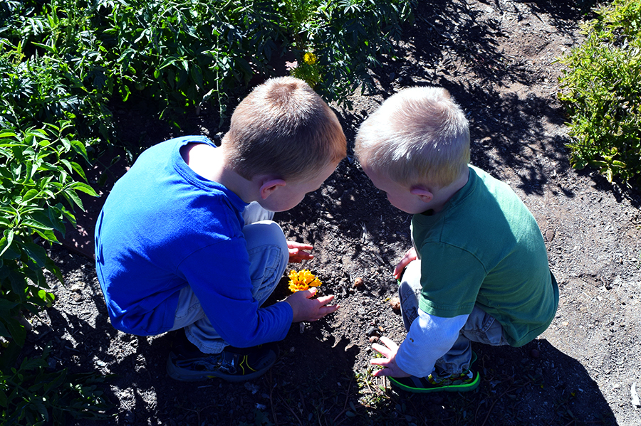Planting tomatoes for Mama